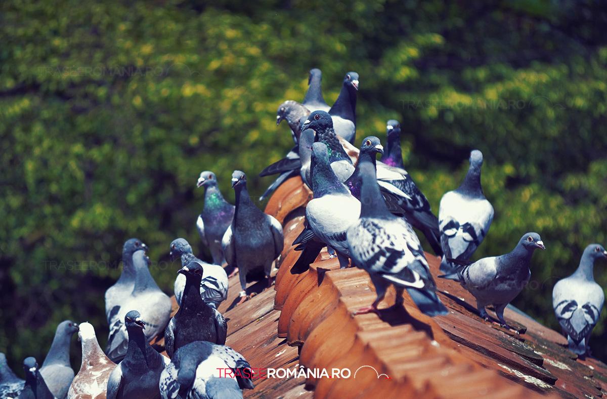 Ce sa vezi in Sighisoara