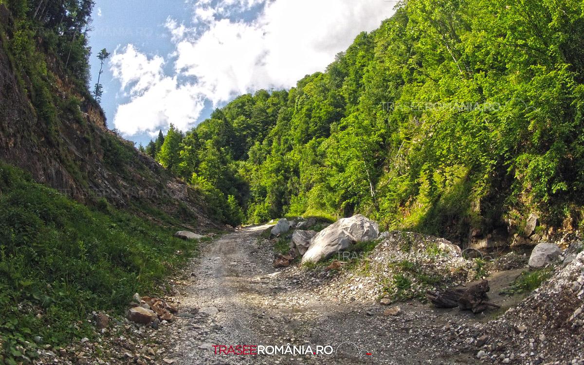Drumul forestier spre Carierele de Marmura Ruschita
