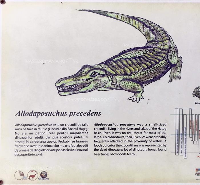 Specii de dinozauri din Romania - Allodaposuchus precedens