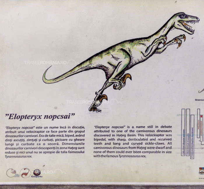 Specii de dinozauri din Romania - Elopteryx nopcsai