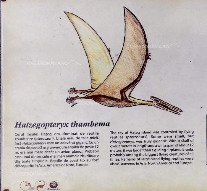 Specii de dinozauri din Romania - Hatzegopteryx thambema