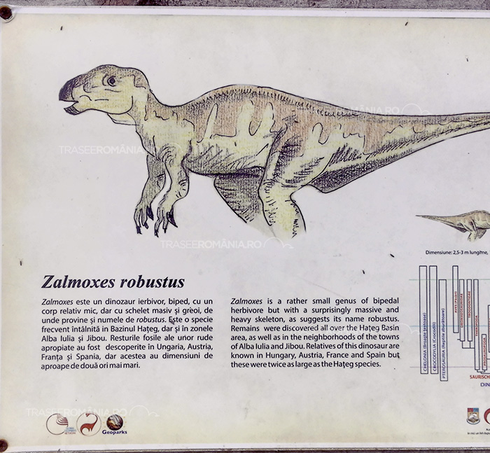 Specii de dinozauri din Romania - Zamolxes robustus