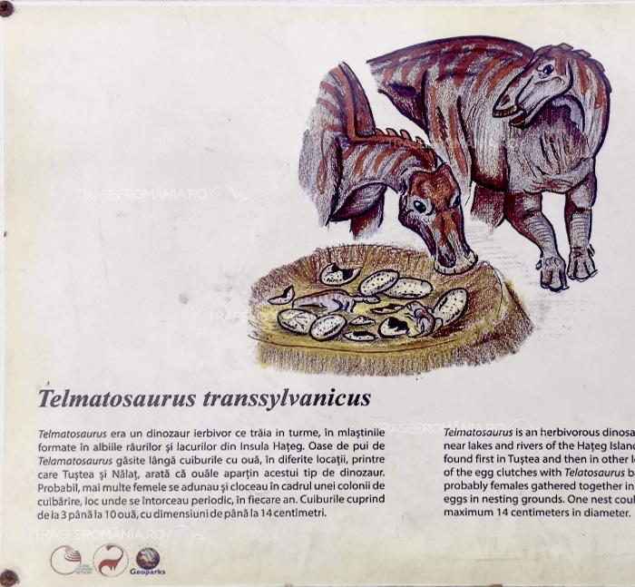 Specii de dinozauri din Romania - Telmatosaurus Transsylvanicus