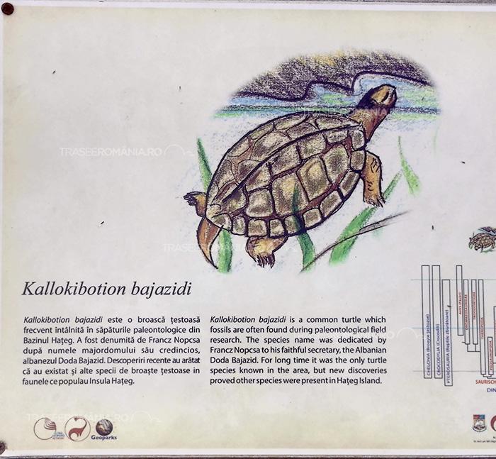 Specii de dinozauri din Romania - Kallokibotion bajazidi