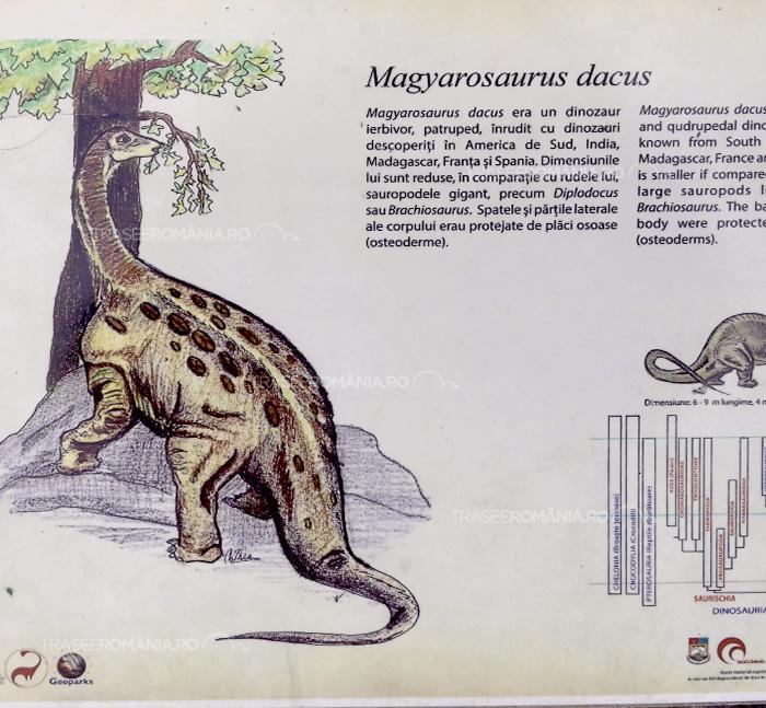 Specii de dinozauri din Romania - Magyarosaurus dacus