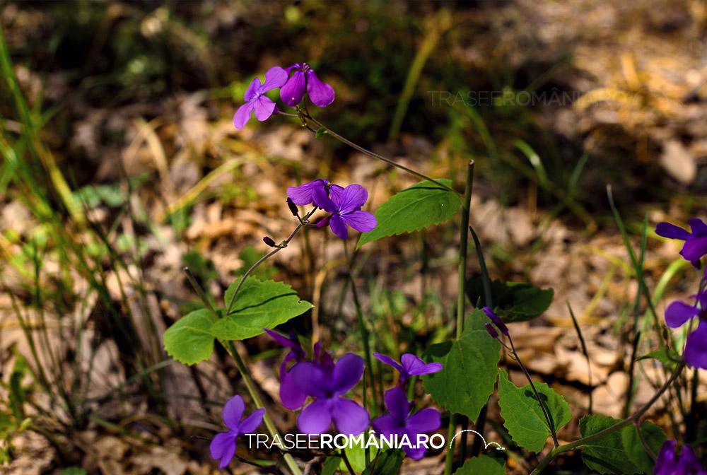 Flori de la Dunare