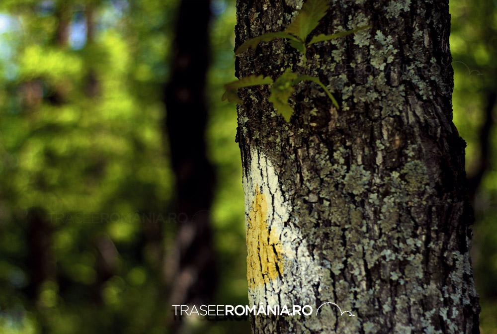 Lemn stejar