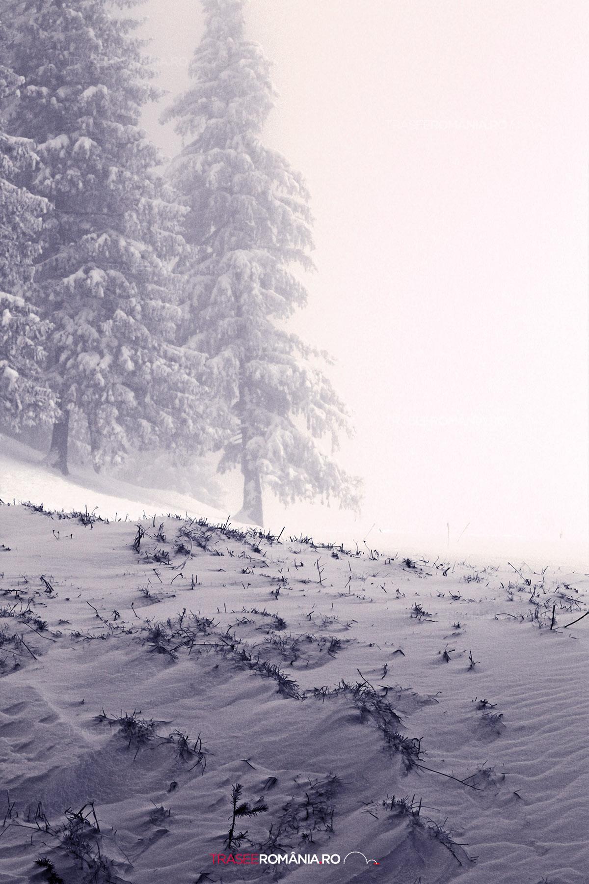 Iarna in Muntii Bucegi