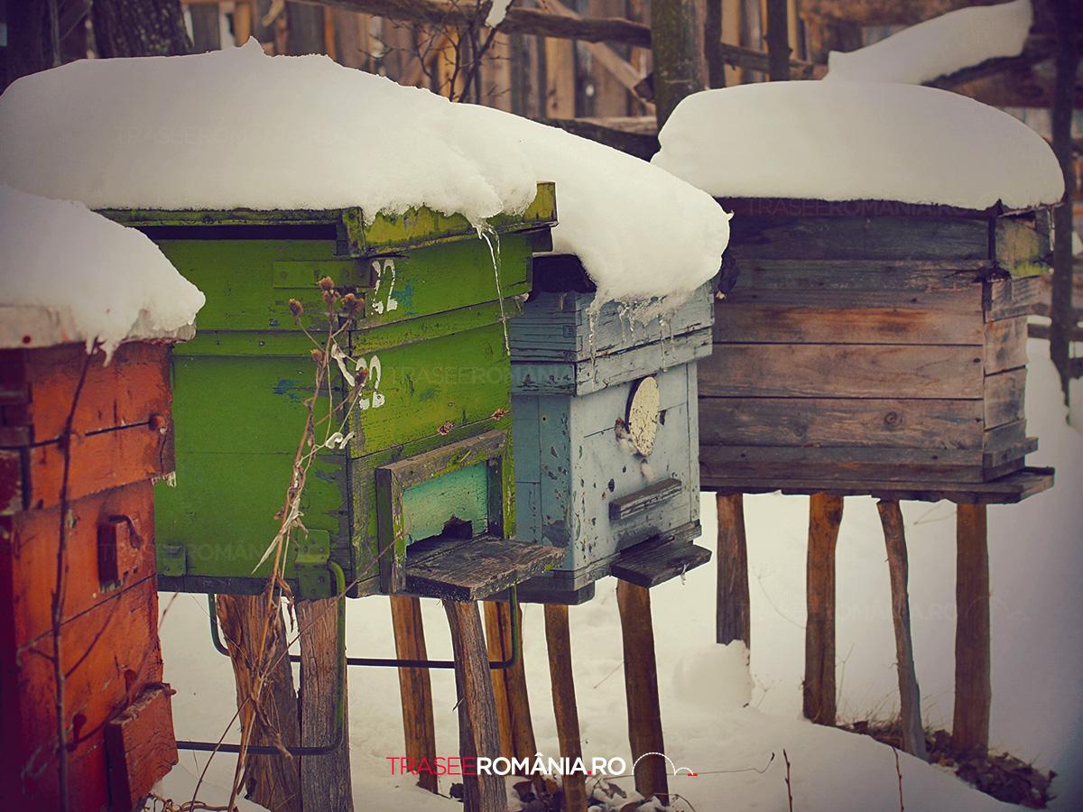 Stupine in Cioclovina - Parcul Natural Gradistea Muncelului