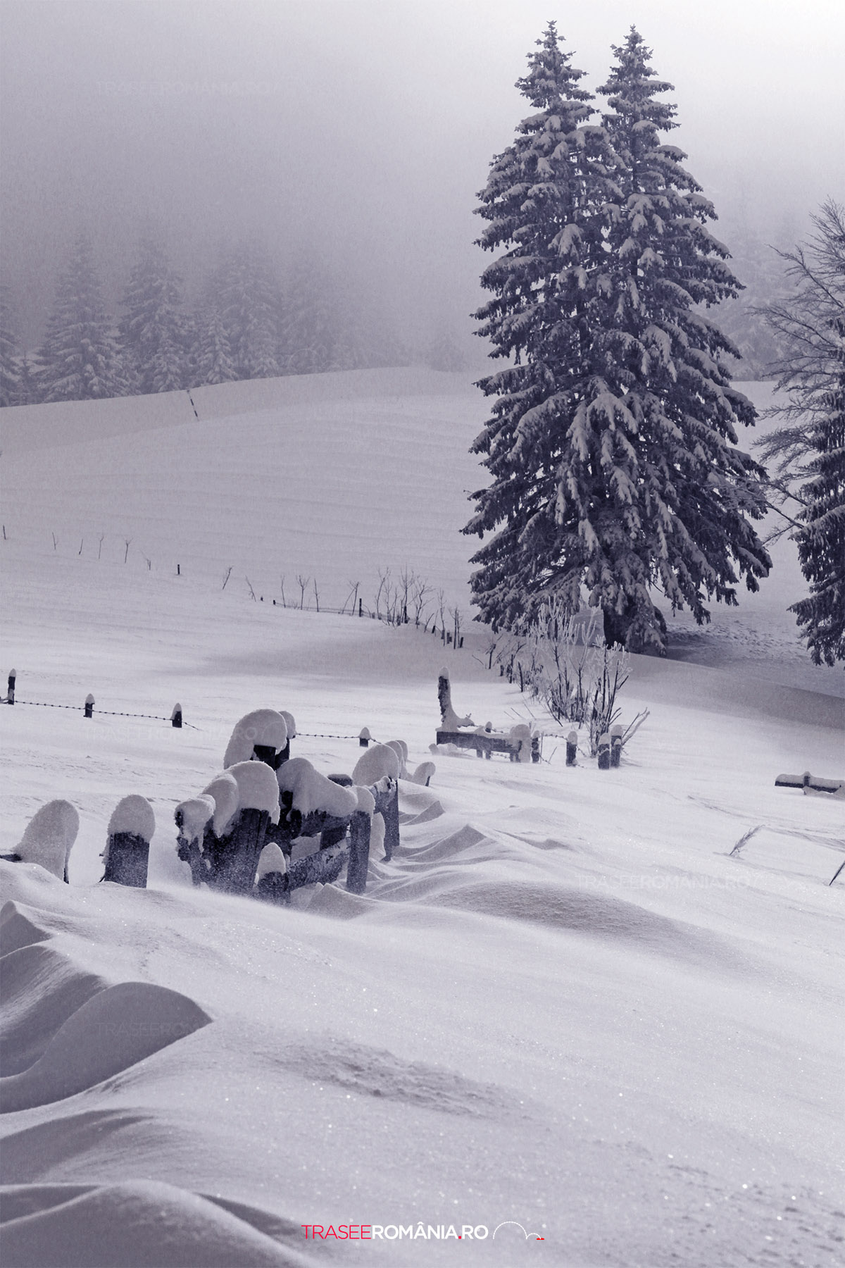 Iarna la Cabana Gura Diham