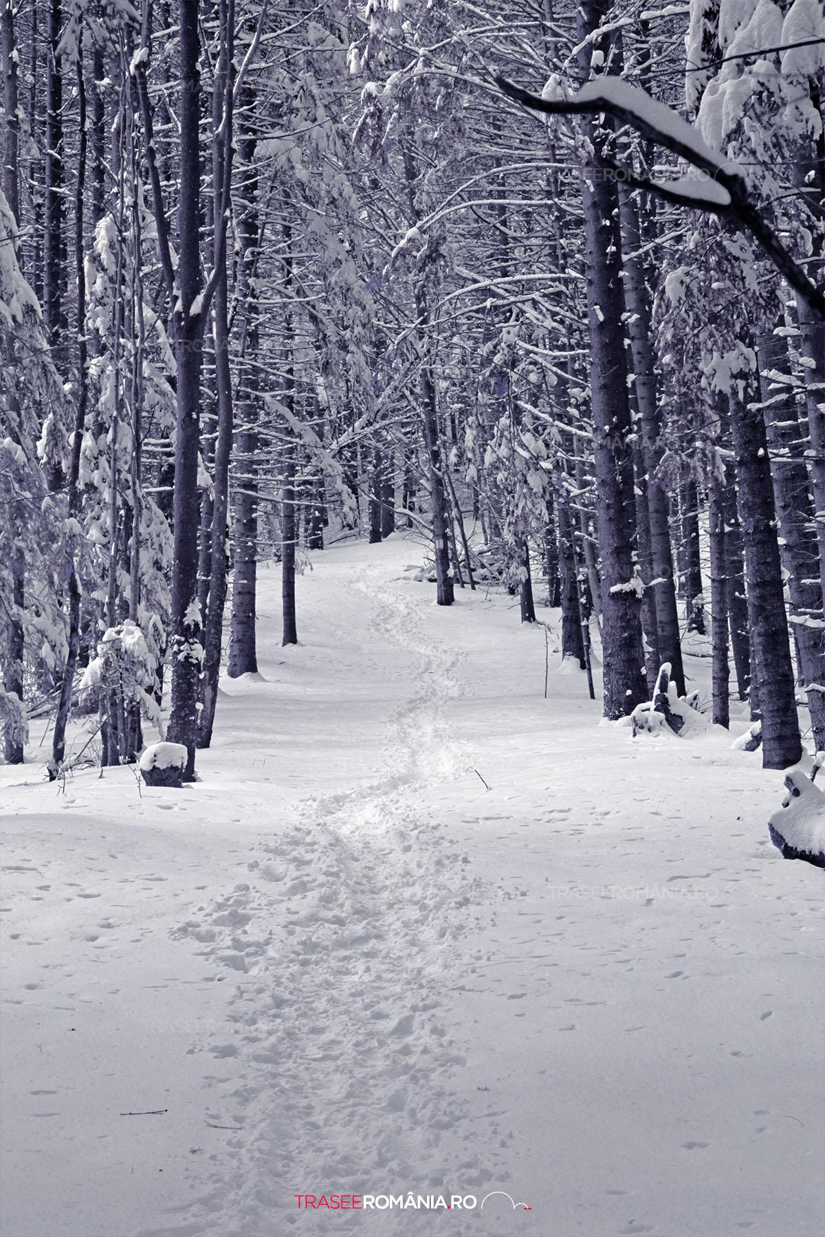 Traseu de iarna spre Cabana Malaesti