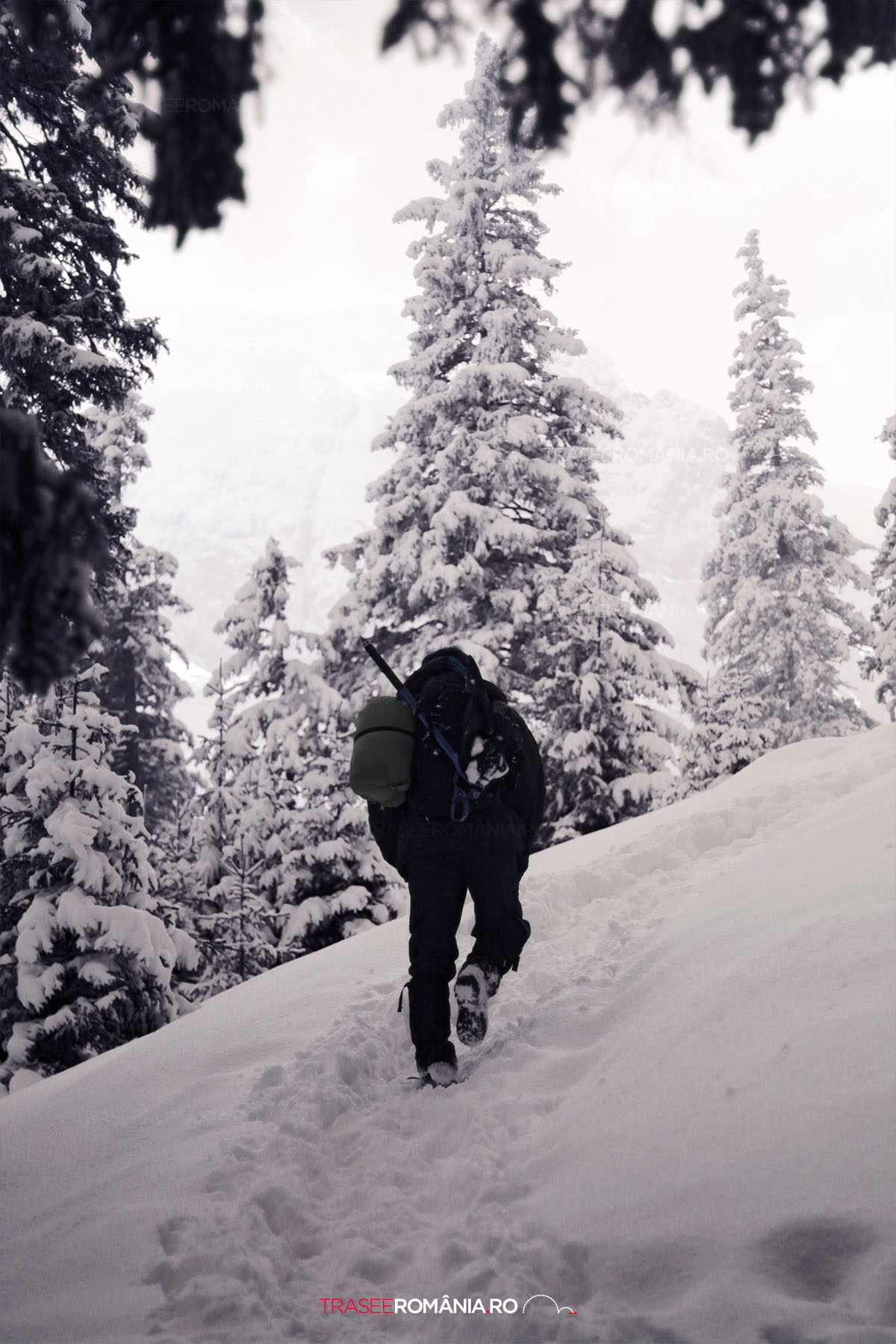 Iarna spre Cabana Malaesti