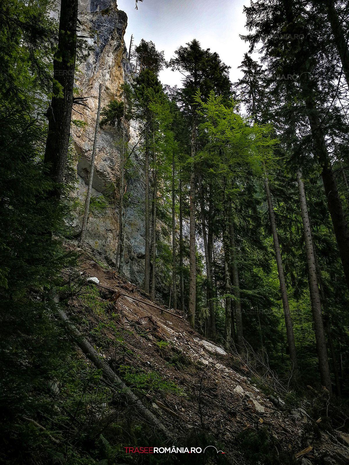 Drumetie in Piatra Craiului Refugiul Sperantelor - Brâul Ciorânga Mare